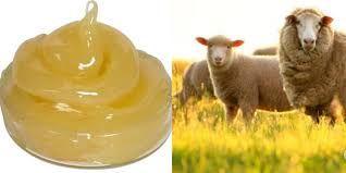 Kem Lansinoh được chiết cuất từ mỡ cừu nên an toàn cho người sử dụng