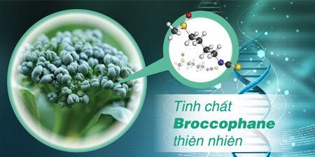 Tinh chất từ Broccophane thiên nhiên giúp tăng Thioredoxin, bảo vệ tế bào võng mạc và thủy tinh thể giúp tăng cường thị lực
