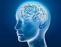 Bổ não, tăng cường  trí nhớ